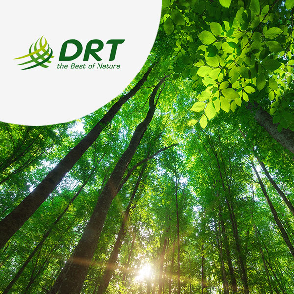 DRT opte pour l'ERP Cadexpress S/4 Chemicals avec TVH consulting